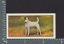 Fox Terrier (Smooth-Haired) dog from series Dogs by Barbers Teas tea card #15