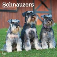 Schnauzers Intl 2020 Square Wall Calendar by Browntrout an Ideal Gift FREE POST