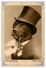 Victorian Dog With Pipe Vintage Photograph A++ Reprint Cabinet Card CDV
