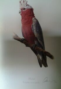 Gordon Hanley, L Edition Print - Classic Bird Study Series - 'Galah'