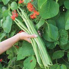Vegetale Fagiolo Rampicante Signora di 55 Semi migliori