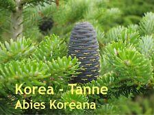 ***Abiesöl, Koreatanne  (Abies koreana) 30 ml, naturrein, Saunaöl!!