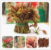 100 Pcs Seeds Toona Sinensis Bonsai Organic Shoots Tree Vegetable Novel Plants N