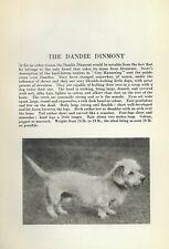 Dandie Dinmont - 1931 Vintage Dog Print - Breed Description - Matted