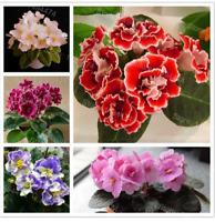 50 PCS Seeds African Violet Mix Colors Flowers Bonsai Saintpaulia Ionantha 2019
