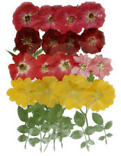 Pressed flowers, red roses, pink roses, larkspur, evening primrose, foliage