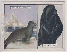 Fur Seal Its Fur Pelt Trapping Hunting c90 Y/O Ad Trade Card