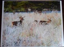 2 Bucks on Frosty Morning,16x20 Ken Goss signed photograph