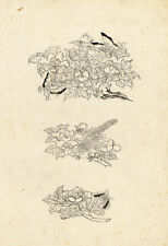 Antique Japanese Print-BUTTERFLY-BIRD-FLOWER-1850