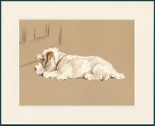 SEALYHAM TERRIER LOVELY LITTLE DOG PRINT MOUNTED READY TO FRAME