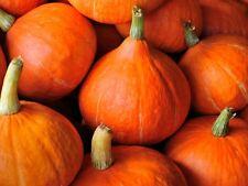 10 Graines de Courge Potimarron Méthode BIO seeds plantes légume ancien potager