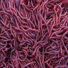 50Pcs Earthworm Freshwater Red Fishing Soft Baits Worm Lures Crankbaits Tackle
