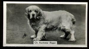 Tobacco Card, John Sinclair, CHAMPION DOGS, A Series, 1938, Clumber Spaniel, #20