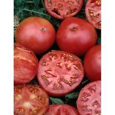 Tomato (Better Boy) Hybrid Garden Vegetable seed (25 seeds)