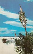 Vintage Chrome Postcard B173 Yuccas in Great White Sands National Monument NM