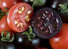 25 Indigo Rose, Hand Selected, premium Tomato Seeds, Organically Grown