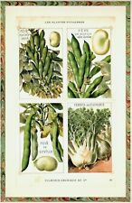 GREEN BEAN VARIETIES contemporary vegetable print