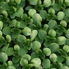Kings Seeds - Lambs Lettuce Corn Salad Vit - 450 Seeds
