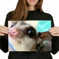 A4 - Cute Flying Squirrel Face Poster 29.7X21cm280gsm #3281