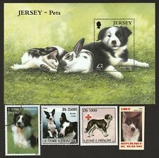 Border Collie * Int'l Dog Postage Stamp Art Collection *Great Gift Idea*