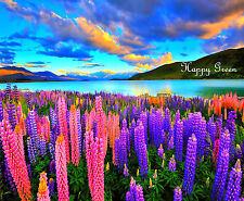 Flower - Lupin - Sunrise - Lupinus mutabile - 30 SEEDS