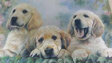 "Three Lab Puppies Silverplated Litho Print #303MS 8x10"" United Kingdom Dog Art"