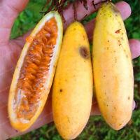 Passiflora Banana Passion Seeds Plants Fruit Bonsai Pink Flower Tropical Garden
