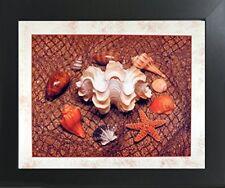 Starfish with Seashell Ocean Wall Bathroom Decor Art Print Framed Picture 20x24