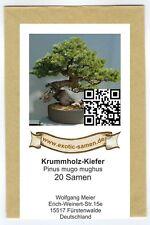 Bonsai - Pinus mugo mughus - Krummholzkiefer (20 Samen)