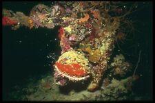 012010 Multi Coloured Reef Life A4 Photo Print