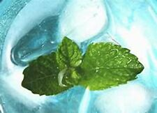 4 oz Candle Scent Oil-ICY MINT