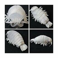 Sea Creature Giant Isopod Realistic Stuffed Plush Doll M Size / 20 cm wTrack