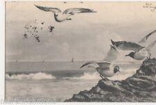 Birds, M. Andreossi, 1903 Art Postcard, B558