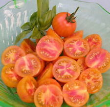 CHERRY TOMATO - ISIS CANDY (25 SEEDS)