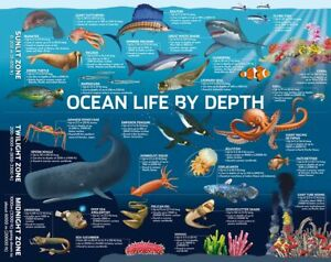 500 Piece Hinkler Jigsaw Puzzle Ocean Life by Depth Cardboard Puzzle