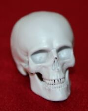 1:6 scale Custom made Resin  anatomical male Skull Accessory for 12in. figures