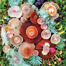 Ceaco Mushrooms Jawbone Puzzle - 750 Pieces FREE Puzzle Poster included