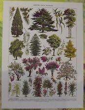 Ancienne Gravure Larousse 1950 Art Print on Original Antique Book Page Lilas