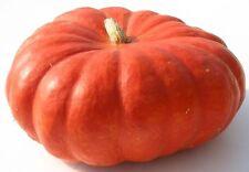 Pumpkin ROUGE VIF D'ETAMPES- Pumpkin Seeds- SHOW CHAMPION-20 LARGE SEEDS