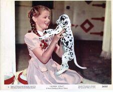 WARD BOND FRANCES DEE YOUNG DONNA CORCORAN GYPSY COLT Original 8x10 Lobby Card 7