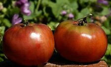 Rare Dark Tomato Seeds - MIDNIGHT IN MOSCOW - 20 Heirloom Vegetable Seeds
