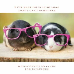 Charity Greetings Card - Guinea Pigs in Glasses
