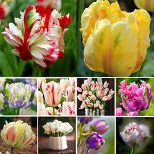 100Pcs Mixed Color Rare Tulip Bulbs Not Seeds Home Garden Decor Natural