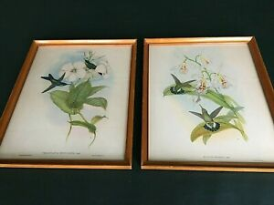 PAIR of Vintage JOHN GOULD & HC RICHTER Framed HUMMINGBIRD Lithographs Prints