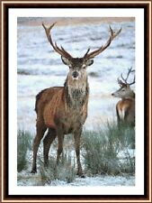 Stag In The Snow 2, New & Exclusive Cross Stitch Kit