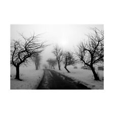 Photo Landscape Black White Snow Winter Tree Framed Print 12x16 Inch