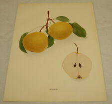 1921 Antique Print/SUDDUTH/From Pears of New York, by Hedrick