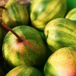 Schweizerhose, ungewöhnliche Birnensorte