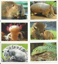 REWE - UNSERE ERDE - 10 Sticker aussuchen - Weltreise - Fauna -Tiere - Flora