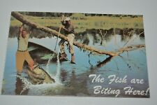 Vintage Fishing The Fish Are Biting Here Funny Lake Country Illinois IL Postcard